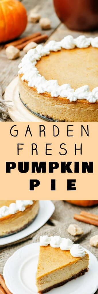 The best freshest Pumpkin Pie you can make! This homemade Garden Fresh Pumpkin Pie recipe uses fresh pumpkin puree made from scratch from your garden pumpkins. This homemade pie recipe is easy to make with condensed milk, a pie crust and plenty of Fall spices. Make sure to add whipped cream to the top of the pie for decoration! This is always the most requested dessert for Thanksgiving!