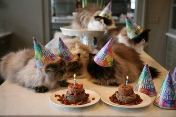 cat-birthday04