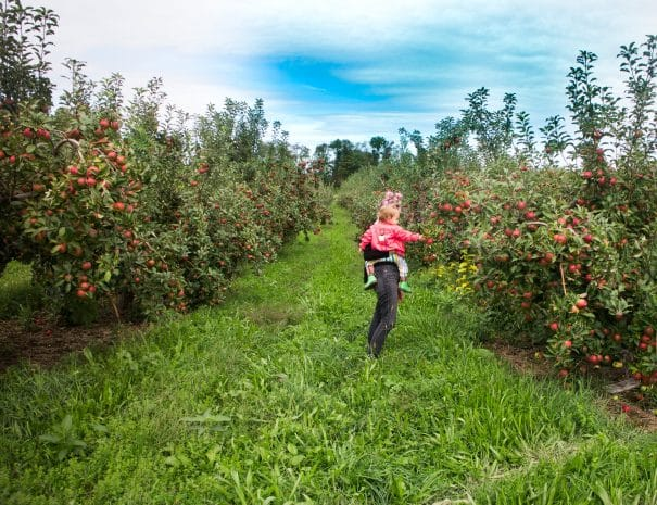 Apple Picking With Children From NYC