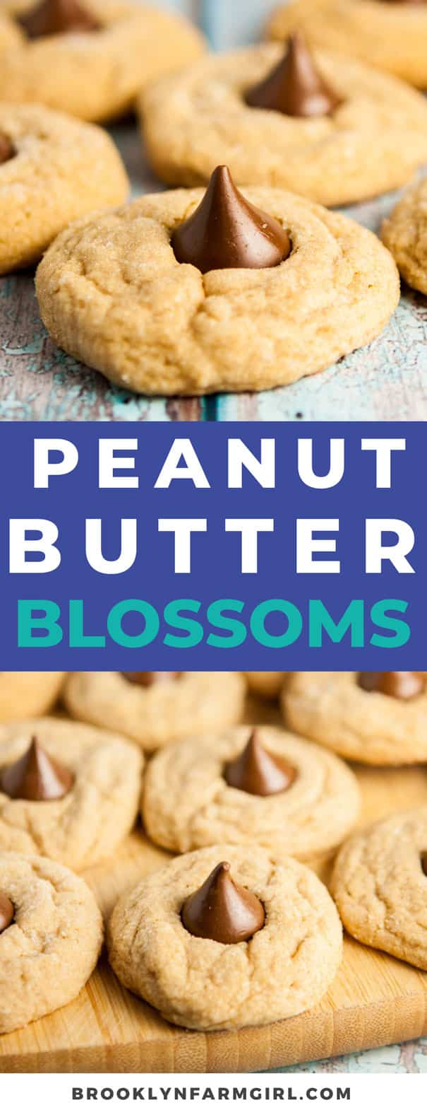Easy to make Peanut Butter Blossoms cookies.  The classic cookies are chewy with a chocolate Hershey kiss in the middle.  One of my favorite homemade Christmas cookies to bake!