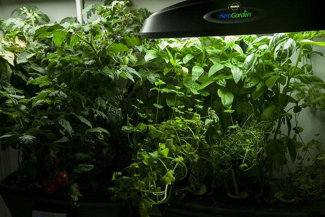 Aero Garden Herb Garden