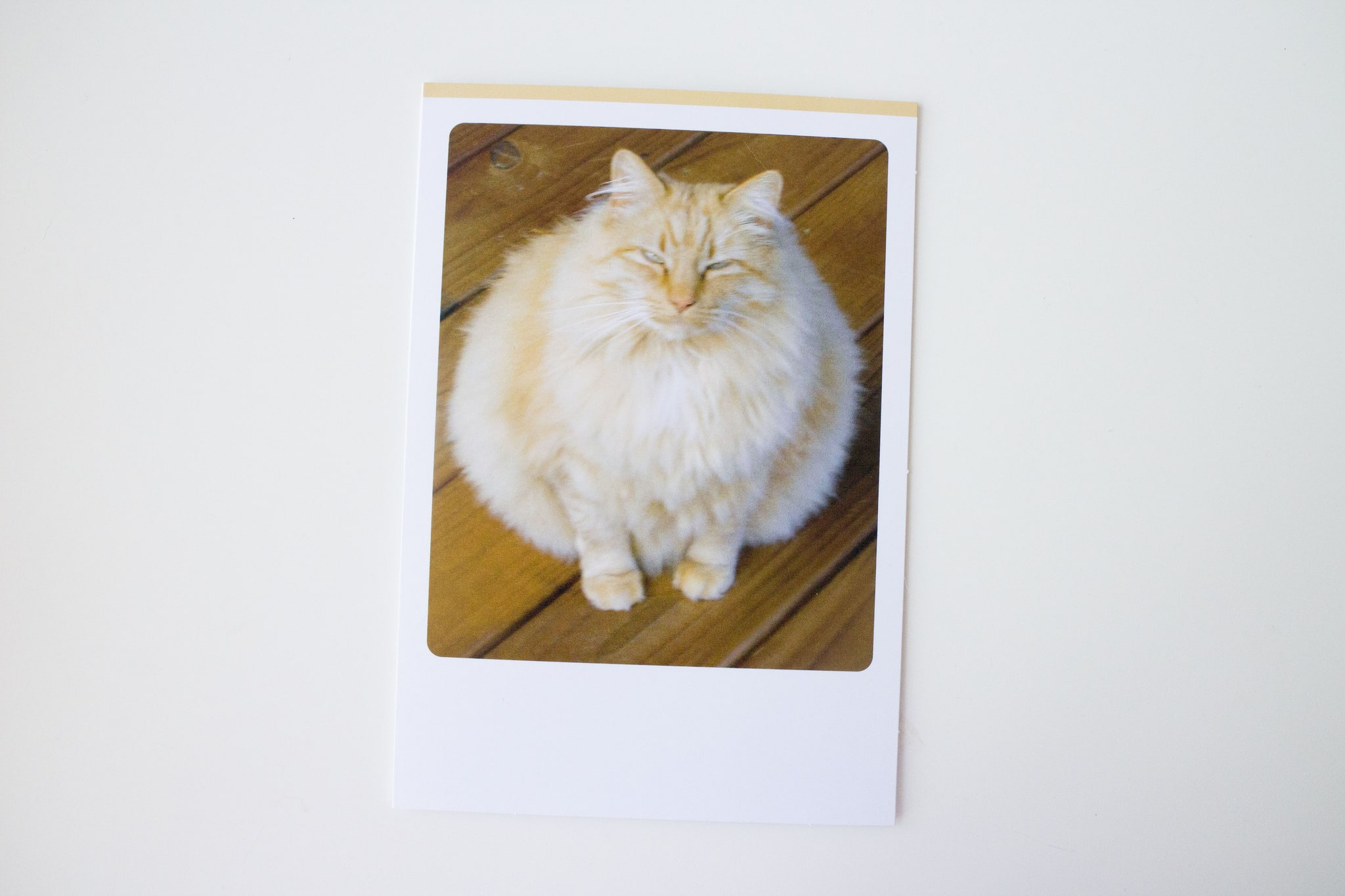 Hallmark Funny Pet Cards_4