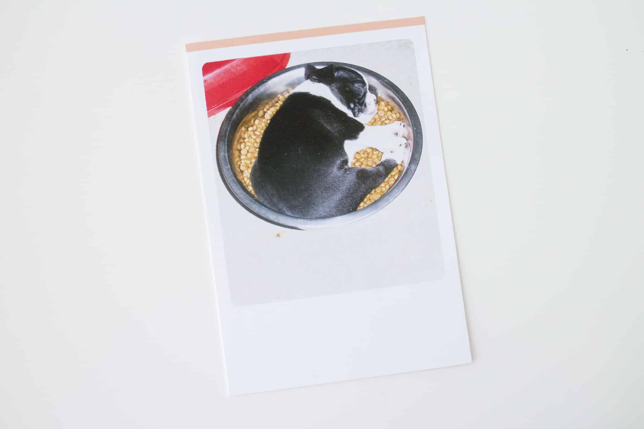 Hallmark Funny Pet Cards_7