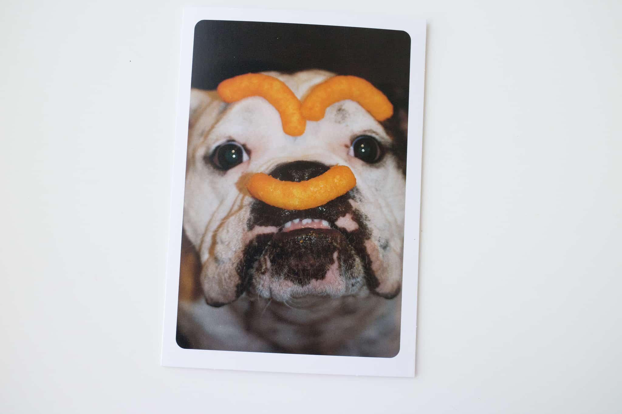 Hallmark Funny Pet Cards