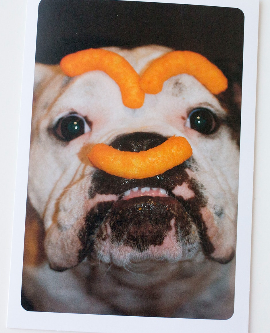 Hallmark Funniest Pet Cards That Will Make You Laugh Brooklyn