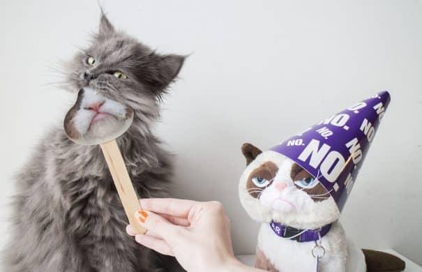 Grumpy Cat Birthday Hat Grumpy Cat No Hd Images Wallpaper For