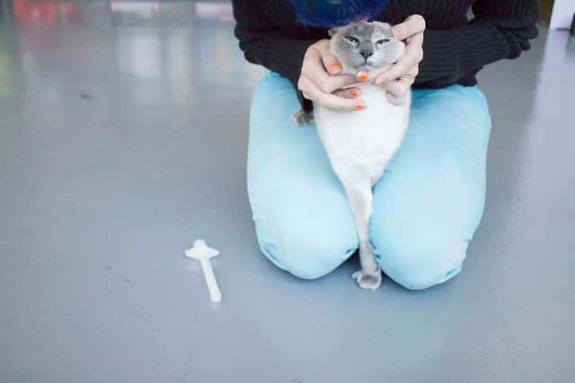 Here's the 4 ways I give my cat a pill all by myself - without bleeding or crying! There's a different way for every personality, even difficult cats!