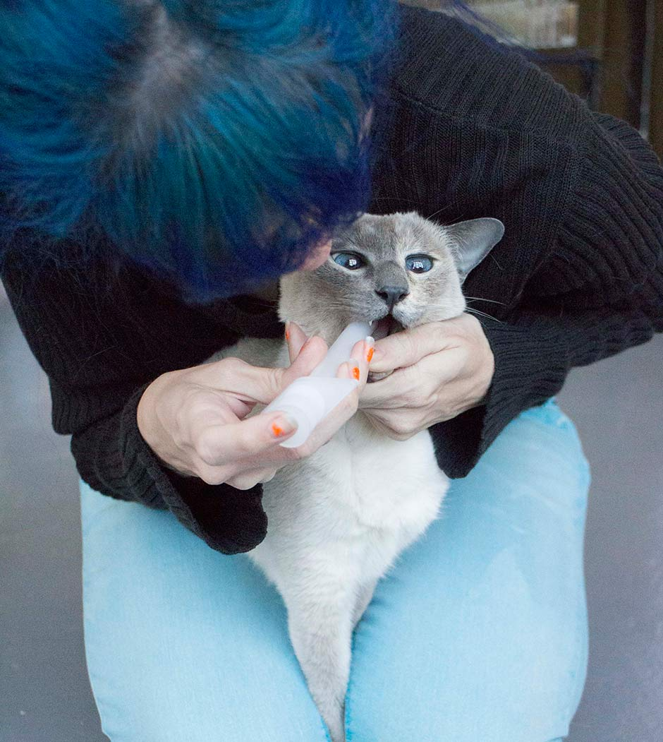 How to Pill a Cat (Without Bleeding) - Brooklyn Farm Girl