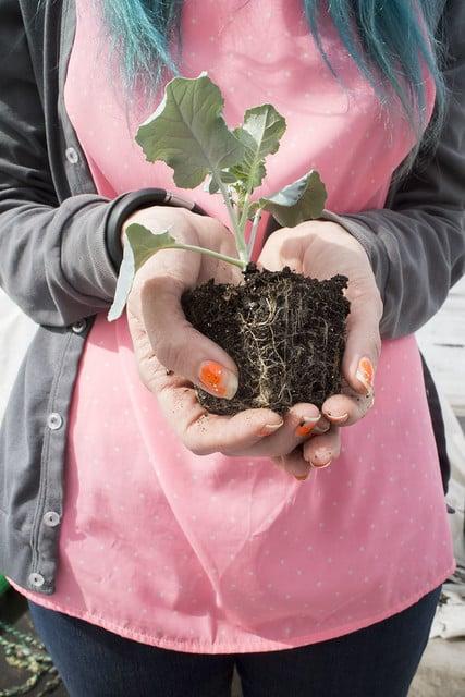 Seedling Planting Spring 2014_12