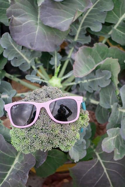 Broccoli Harvest 2014_9