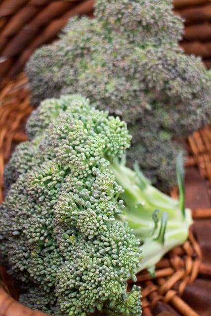 Broccoli Harvest 2014_8
