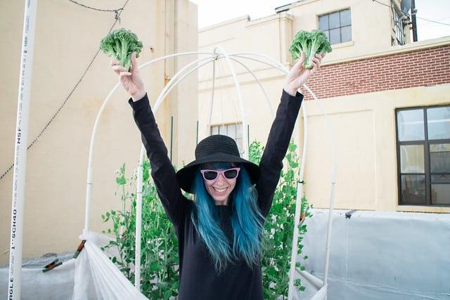 Broccoli Harvest 2014_6