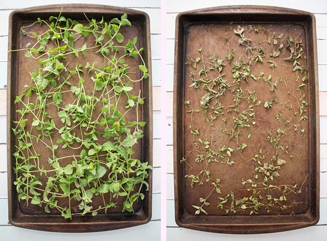 How-to-Dry-Mint-for-Tea-Leaves-Before-After