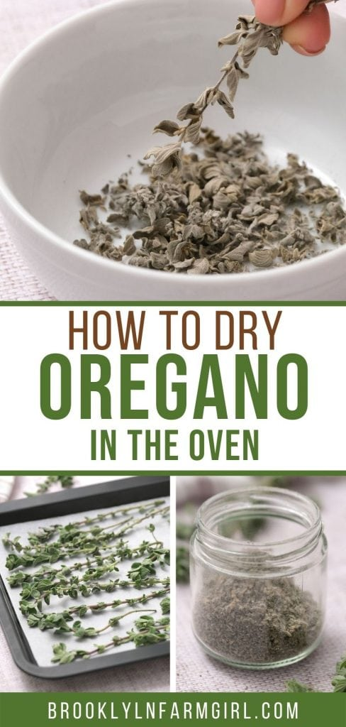 Easy step-by-step instructions on how to dry oregano in 1 hour!  This method is the quickest way to dry herbs.