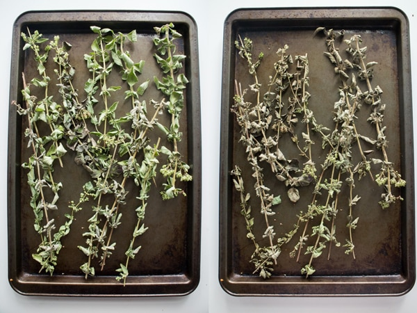 How-to-Dry-Oregano-in-1-Hour_1