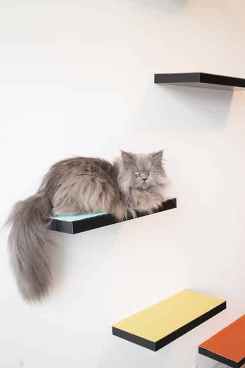 How to build cat shelves that your cat will love for Bookshelf cat tower