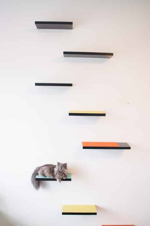 Cool How To Build Cat Shelves That Your Cat Will Love Brooklyn Interior Design Ideas Tzicisoteloinfo