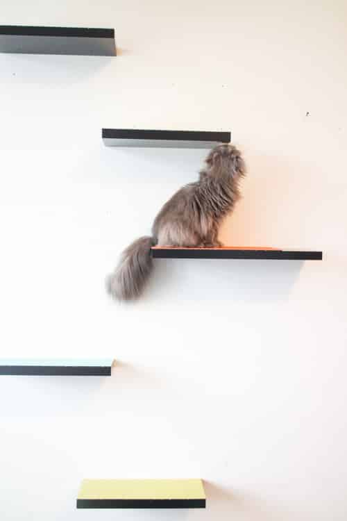 How to build cat shelves your cat will love! This is a easy DIY project.