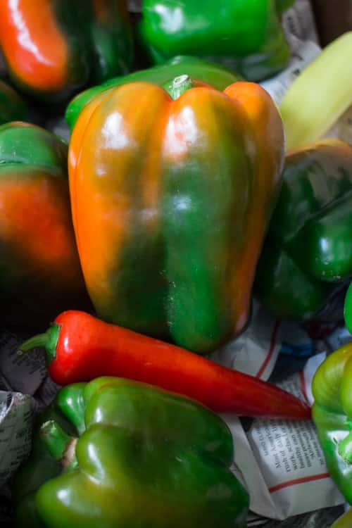 Dad Rules Green Peppers_6