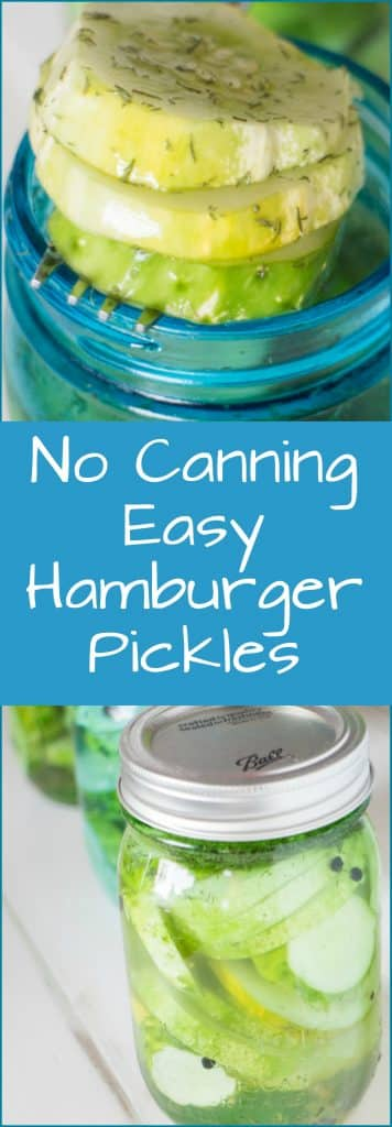 Easy Dill Hamburger Pickles recipe. No canning, no vinegar and they only take 24 hours to pickle!