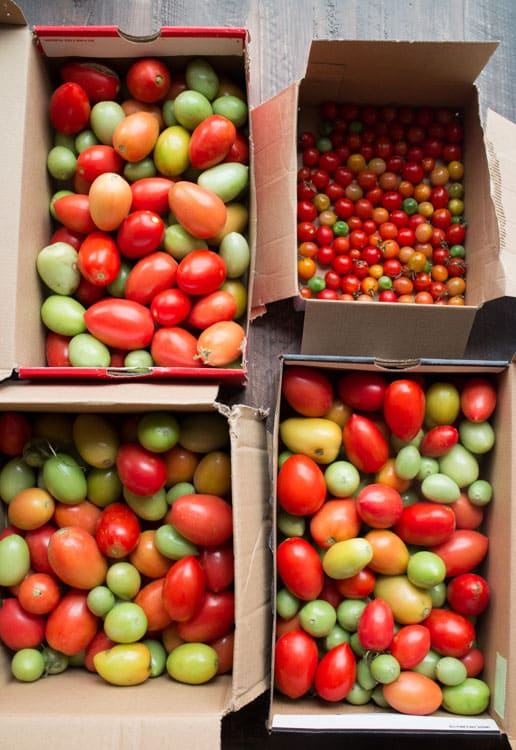 How to Make Tomatoes Turn Red