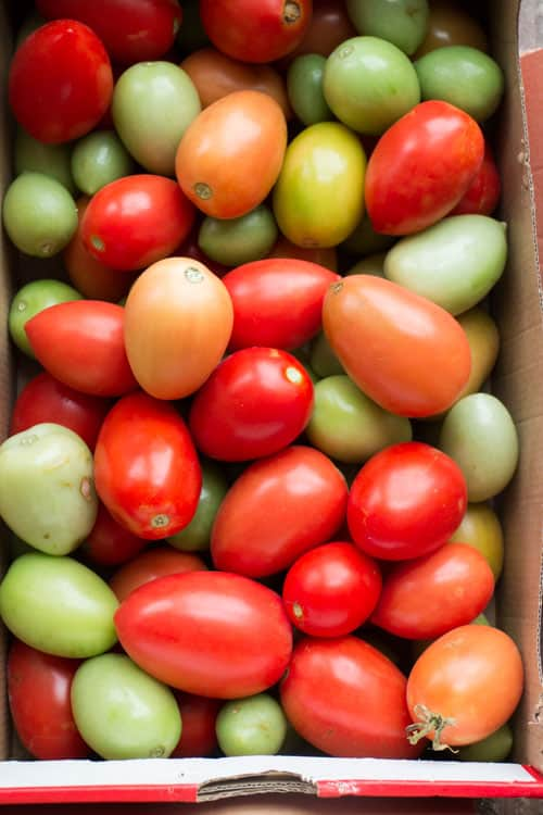 How to Make Tomatoes Turn Red_1