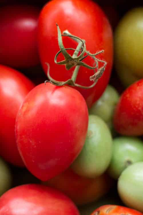How to Make Tomatoes Turn Red_4