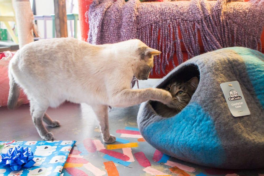 Cat Geeks Cat Cave_1