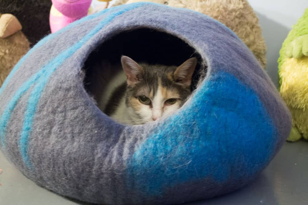 Cat Geeks Cat Cave_11