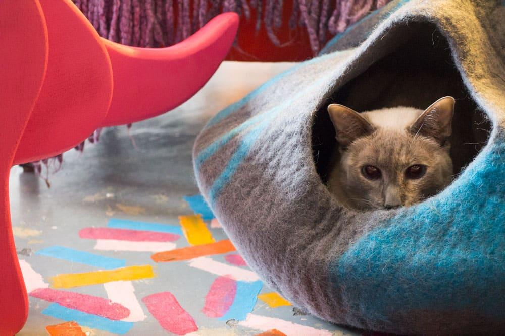 Cat Geeks Cat Cave_2