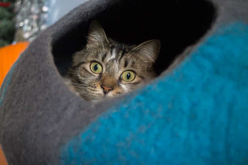 Cat Geeks Cat Cave_3