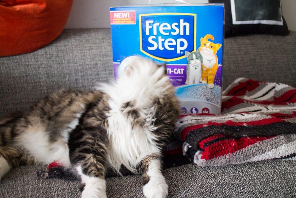 Fresh Step Febreeze_4