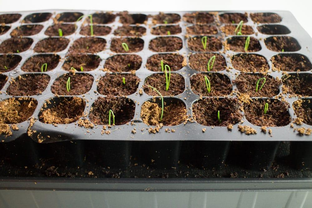 Spring Seed Planting_1