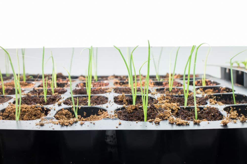 Spring Seed Planting_11