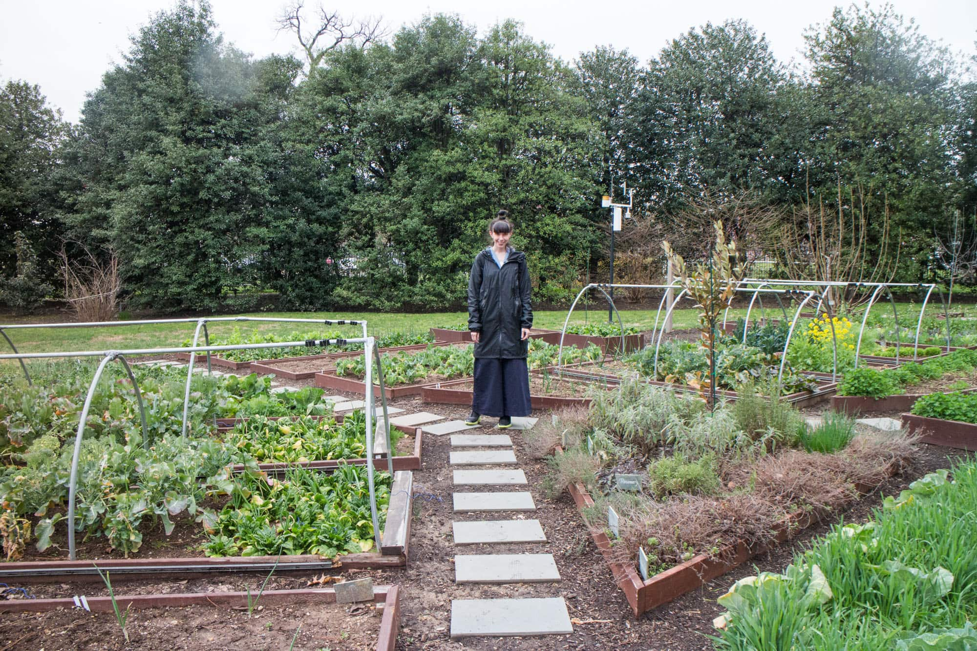 A Visit to the White House Garden - Full Tour of Veggies, Bees and ...