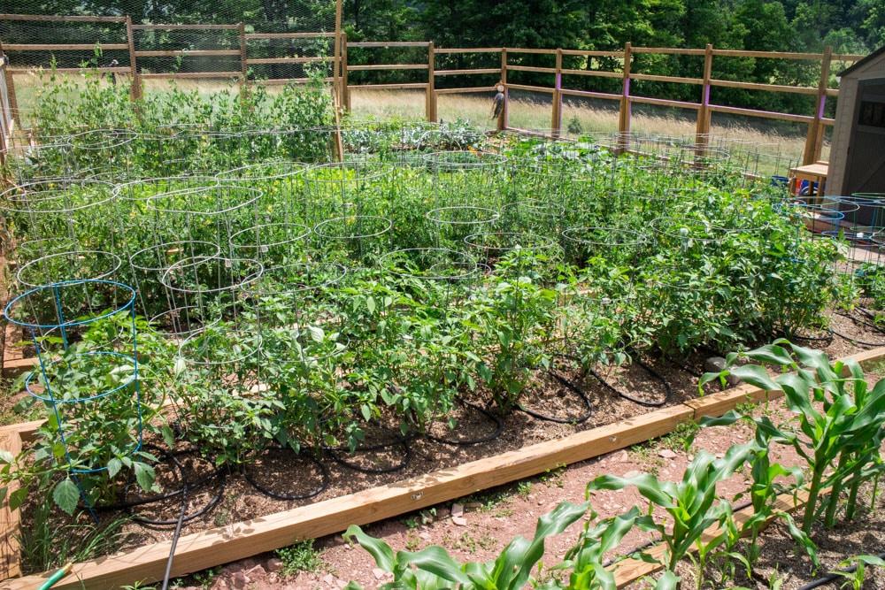 Green and Beautiful Upstate New York Garden