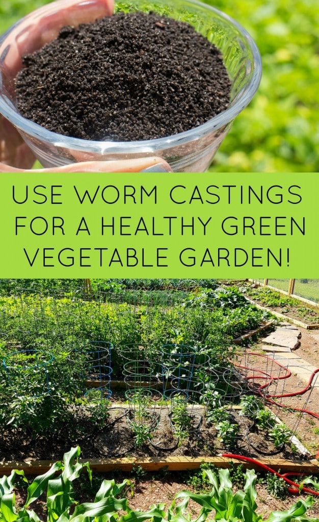 Garden Tip: Use worm castings for a healthy green vegetable garden. Visit the website for more details on how to get worm castings!