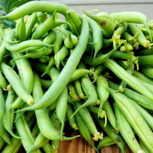 Easy Way to Freeze Fresh Green Beans Without Blanching