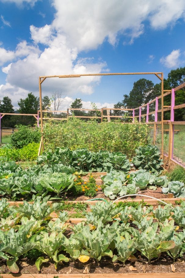 Organic gardening tips on how to switch your garden to full organic. Compost, seeds, watering and testing the soil are all great steps to take.