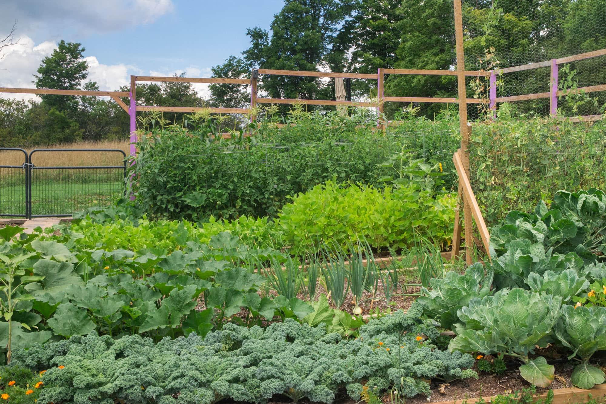 Garden Reveal Here It Is Brooklyn Farm Girl