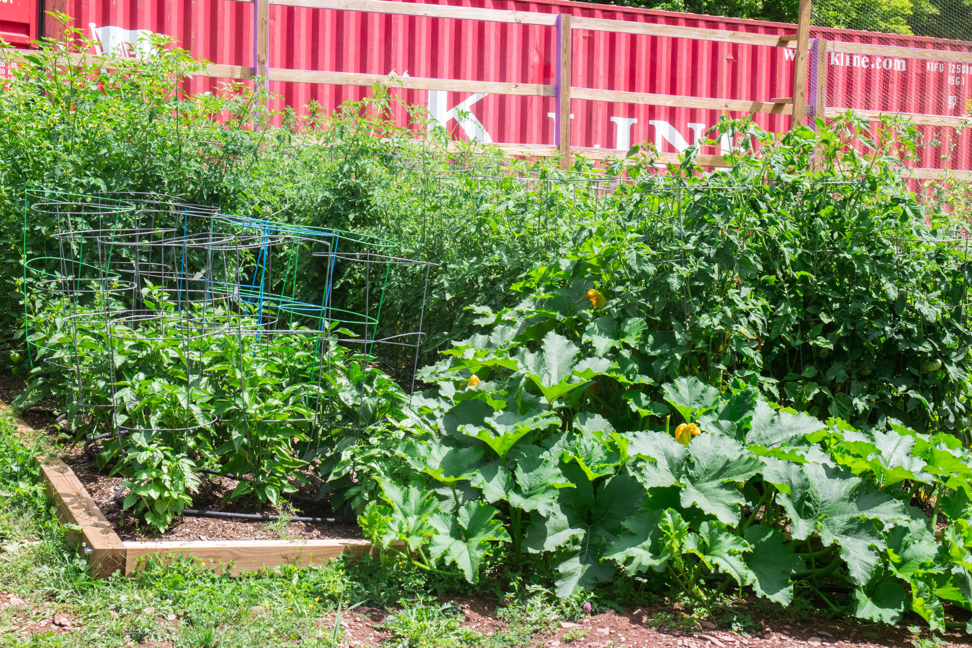 Brooklyn Farm Girl's Colorful Vegetable Garden in Upstate New York.
