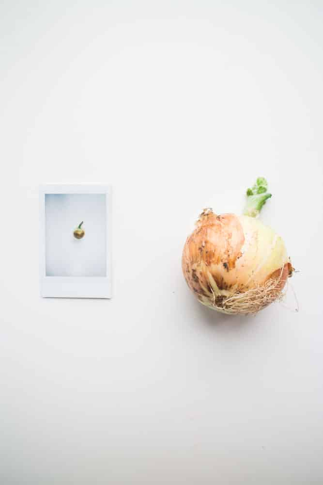 Do you forget what vegetables you have in the refrigerator? With this simple photo project you'll never let your produce go bad again!