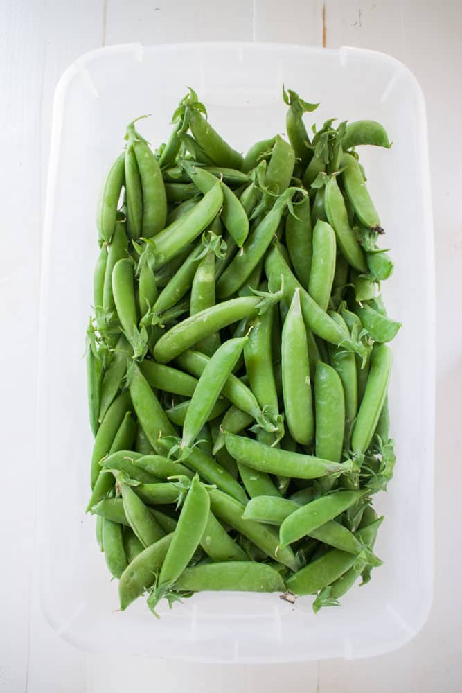 Lime Lentils with Sugar Snap Peas is a delicious healthy side dish made in less than 30 minutes. These make a fantastic dish to serve with chicken or to have on the holiday dinner table. Recipe uses 2 cups dry lentils and 1 1/2 cups fresh sugar snap peas.