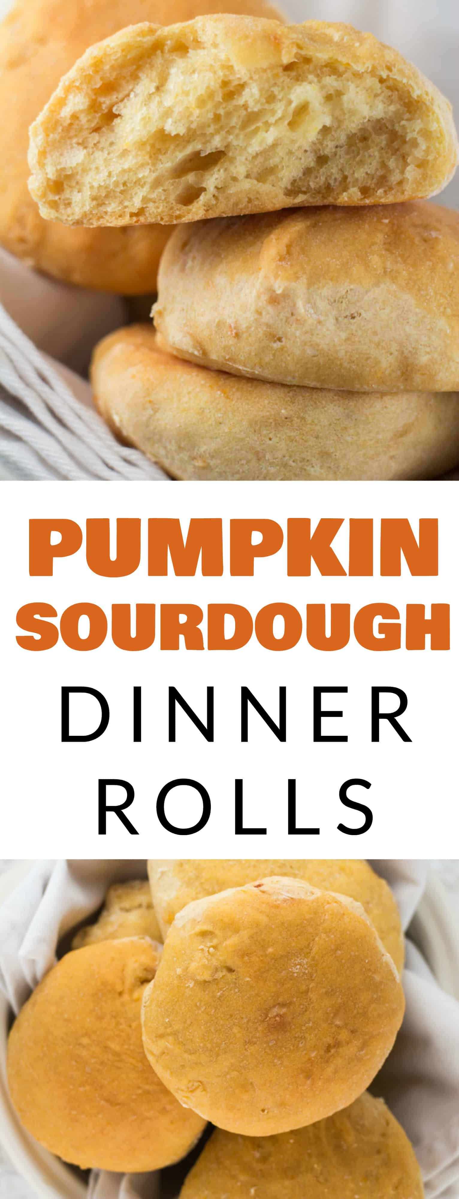 EASY and FLUFFY Sourdough Pumpkin Dinner Rolls recipe! These moist homemade rolls are quick to make!  Make these to serve to your families at Thanksgiving and holiday dinners.