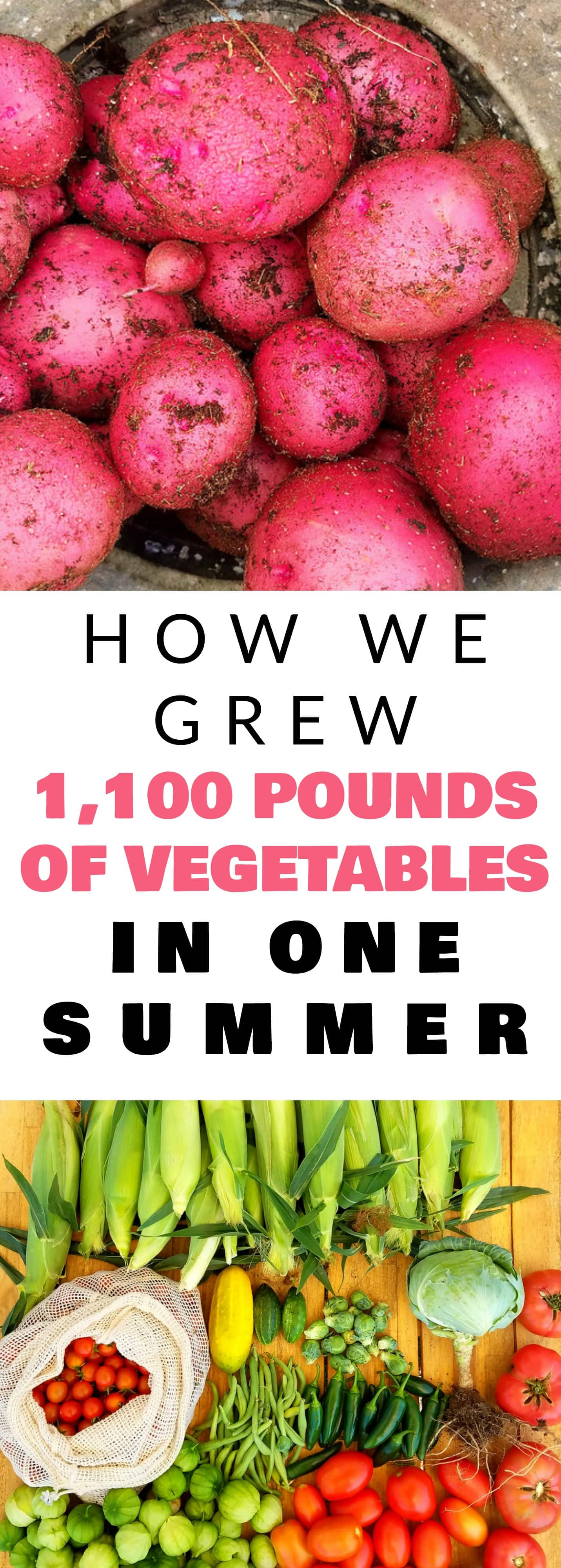 How we grew over 1,100 pounds of vegetables in one Summer! Learn how to grow your own food to last you all year long! Start your own vegetable garden now!