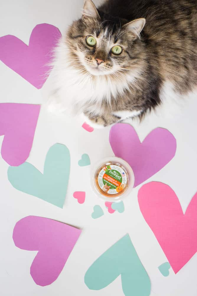 Show your cat you love them on Valentine's Day with a tasty meal!