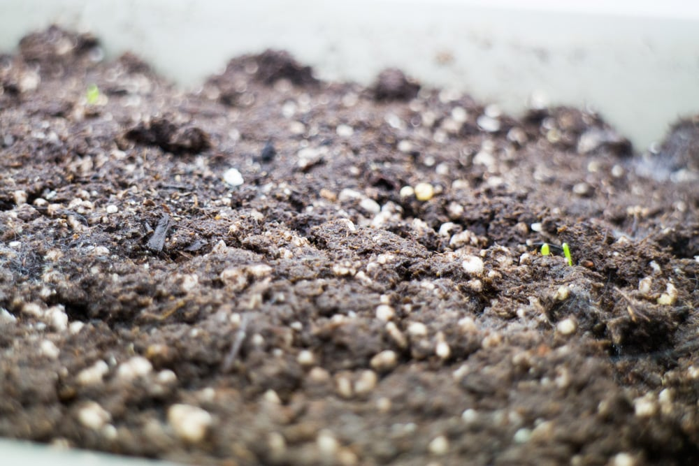 How to Plan Your Spring Garden. Spring is a great time to organize your seeds and decide what vegetables grew great and didn't work last year. Follow these tips and ideas for a successful Spring garden planting season!