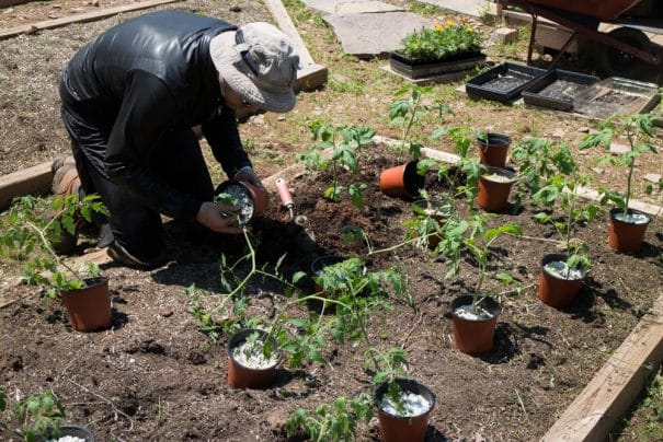 Step by step guide on how to grow tomatoes from seed. Walks you through the process of growing seeds indoors, hardening off and planting in the garden! Learn how we grow hundreds of pounds of tomatoes every year!