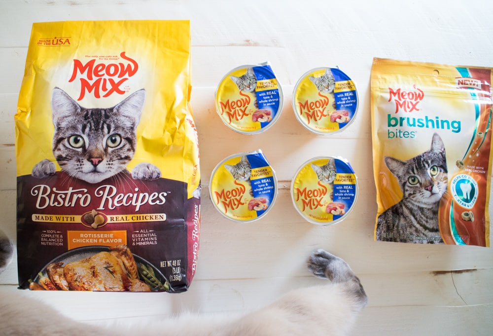 Join me in Celebrating Xanadu's 11th Birthday! Learn how to throw your cat a awesome birthday lunch with Meow Mix food and treats!