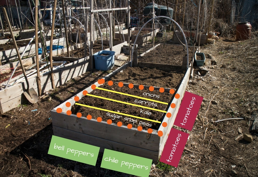 4x4 garden layout
